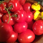 Local Saanich Tomatoes